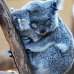 癒されるわ~動物の親と子の画像集