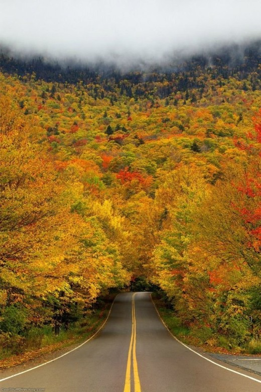 DailyFresher beautiful tunnel of trees in the world 035