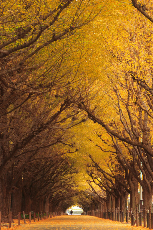 DailyFresher beautiful tunnel of trees in the world 044