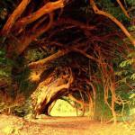 世界で最も美しい樹木のトンネル画像集
