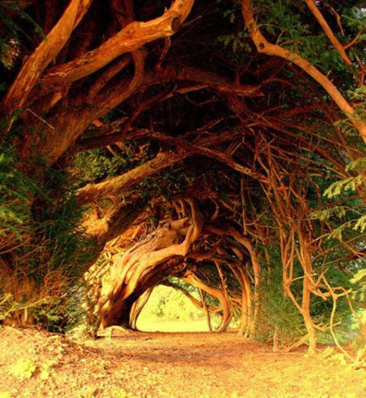 DailyFresher beautiful tunnel of trees in the world 055