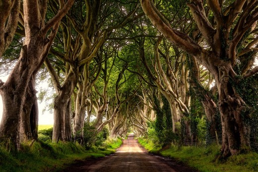 DailyFresher beautiful tunnel of trees in the world 065