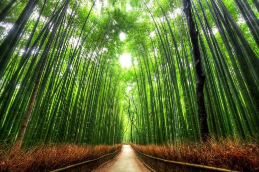 DailyFresher beautiful tunnel of trees in the world 075 (1)