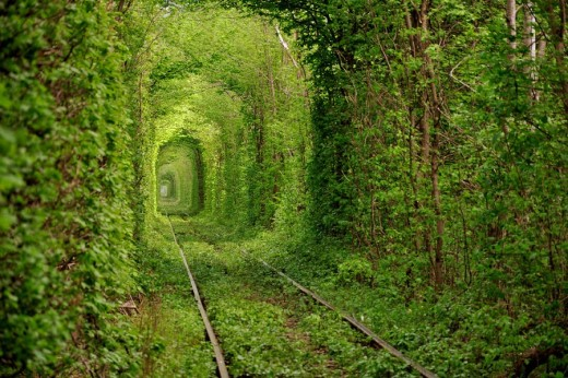 DailyFresher beautiful tunnel of trees in the world 085
