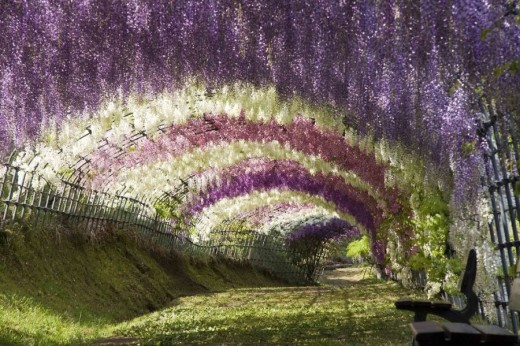 DailyFresher beautiful tunnel of trees in the world 106 (1)