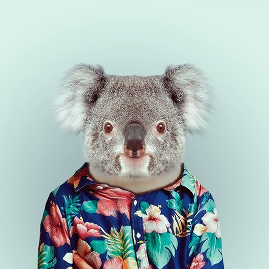 animals-get-fashionable-yago-partal-zoo-portraits4