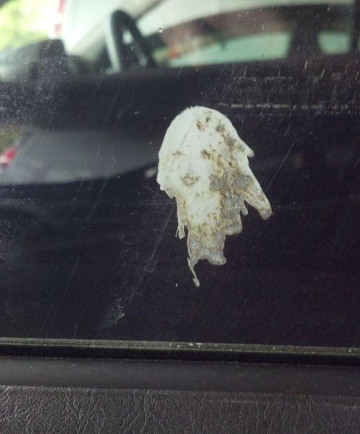 bird-poop-looks-like-a-woman_s