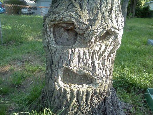 grumpy-tree-get-off-my-lawn_s