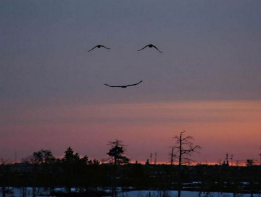 three-birds-make-smiling-face_s