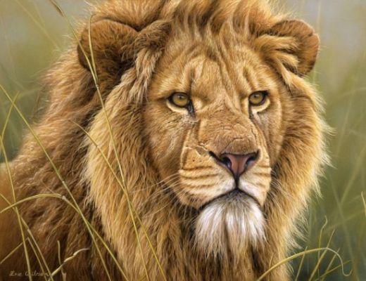 Eric-Wilson-wildlife-550x423_s