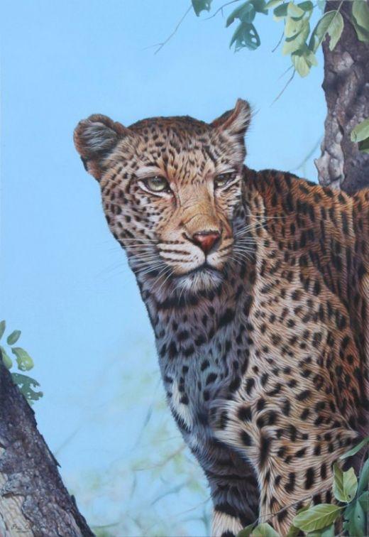Eric-Wilson-wildlife5-550x800_s