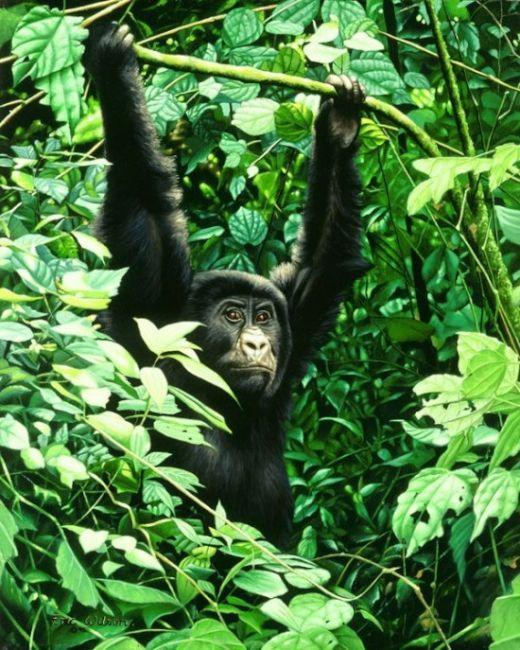 Eric-Wilson-wildlife6-550x687_s
