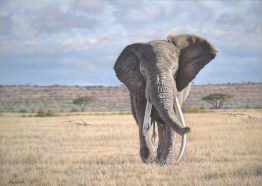 Eric-Wilson-wildlife7-550x389_s