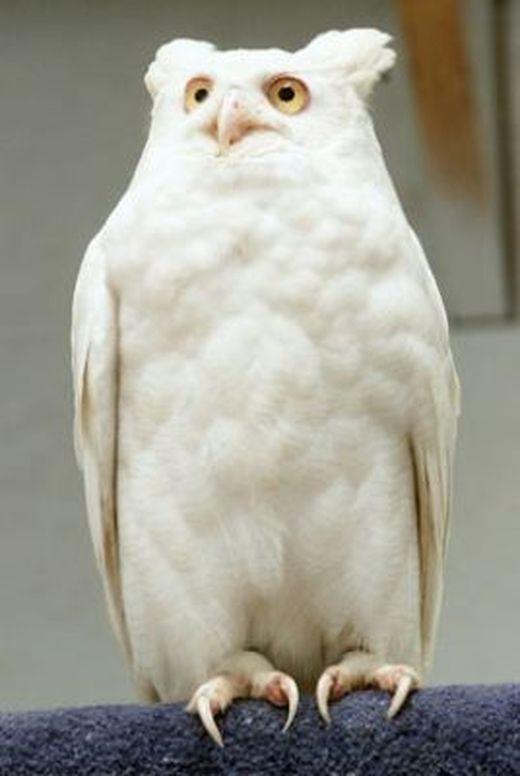 ap_owl_080411_ssv_s