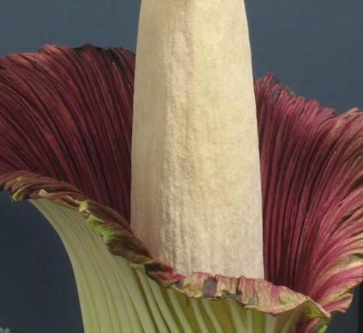 big_flower6_s