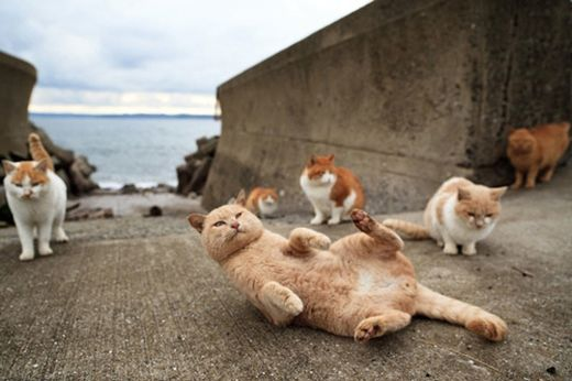 cat-island-2-500_s