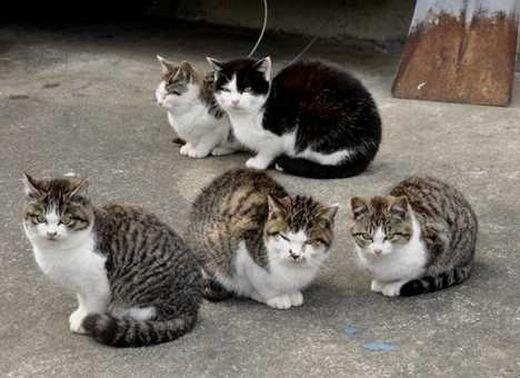 cat_island_1c1_s