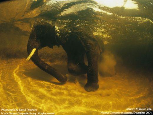 elefante-en-el-agua_s