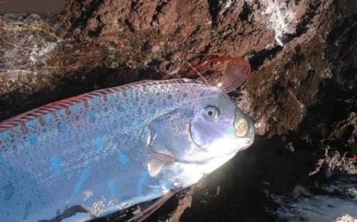 fish3_s