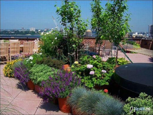 garden_roof_tops_34_s