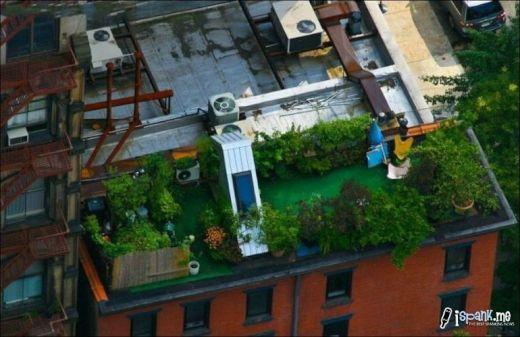 garden_roof_tops_8_s