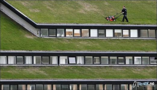 garden_roof_tops_9_s