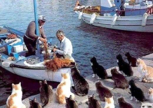 ghadi news - TashiroJima island cats 4634924655038513750_s