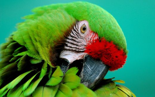 green-parrot-animal-wallpaper-1920x1200-299_s