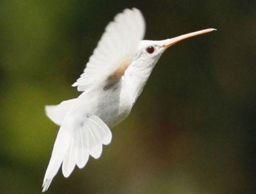 hummingbird-e1375841494469_s