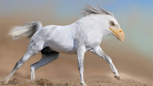 hybrid_animals_6_s