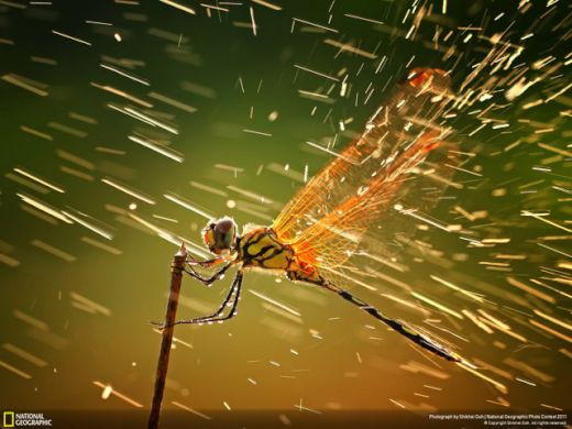national_geographic_29_s