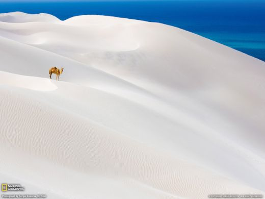 national_geographic_4_s