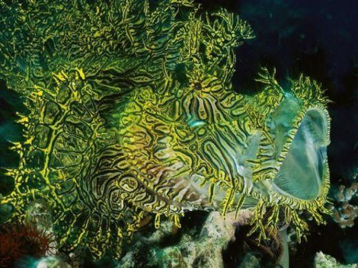 southpacific-scorpionfish_3171_600x450_s