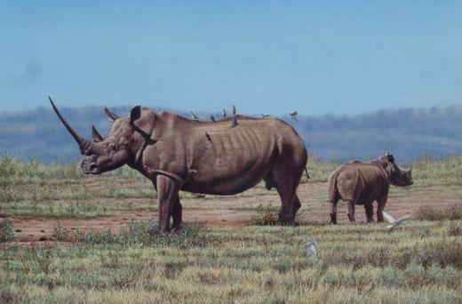 white-rhinos-eric-wilson_s