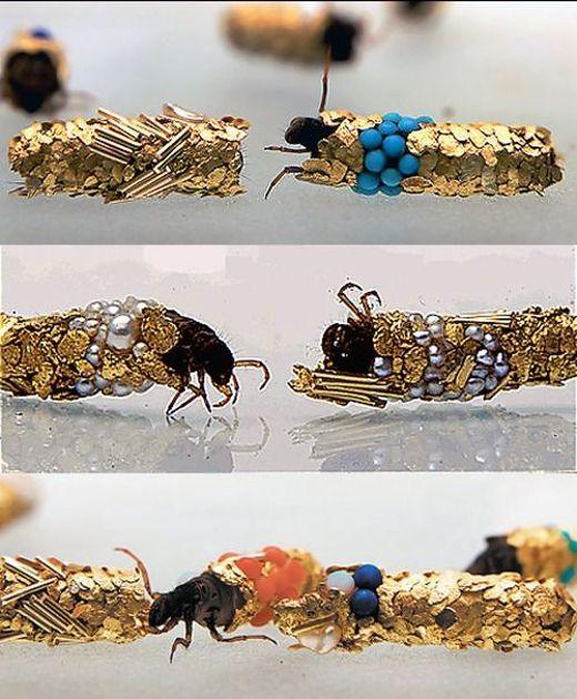 Caddisfly-jewelry3_s