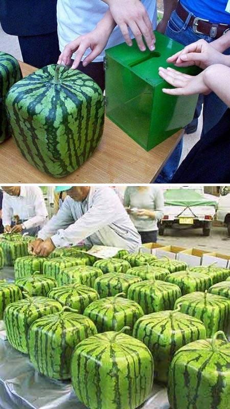 a97133_g089_4-watermelon