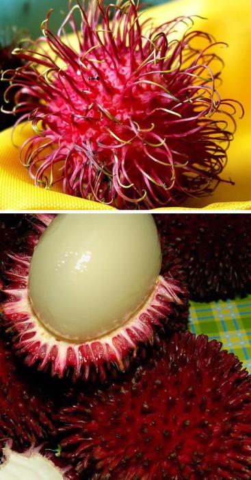 世界のエキゾチックで珍しい果物10選【画像集】