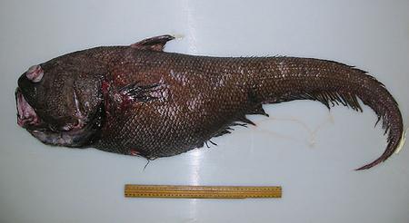 a98433_fish