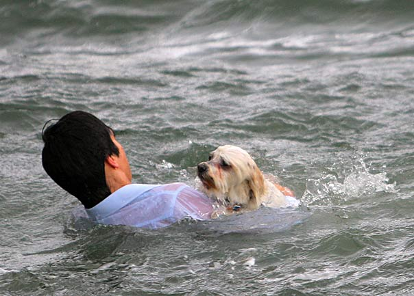 dog_rescue_8