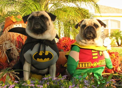 dogs_dressed_as_super_heroes_10_s