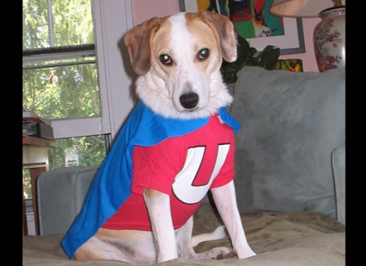 dogs_dressed_as_super_heroes_11_s