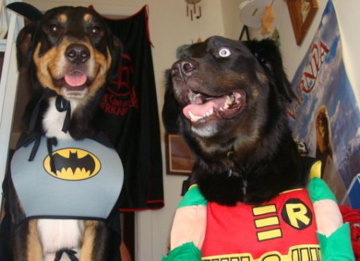 dogs_dressed_as_super_heroes_12_s