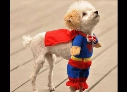 dogs_dressed_as_super_heroes_3_s