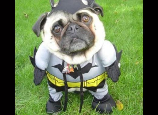 dogs_dressed_as_super_heroes_7_s