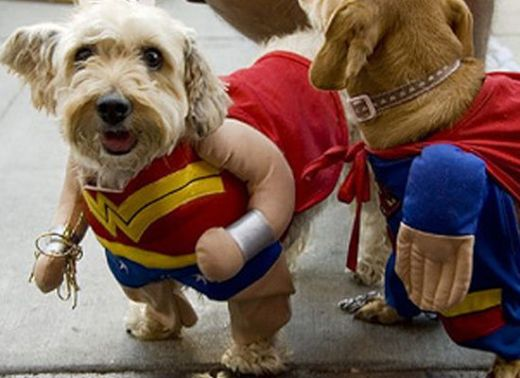 dogs_dressed_as_super_heroes_8_s