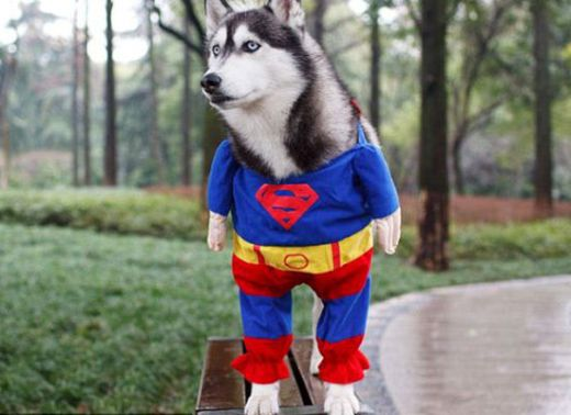 dogs_dressed_as_super_heroes_9_s