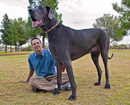 giant_dog_08_s