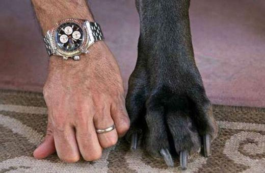 giant_dog_16_s