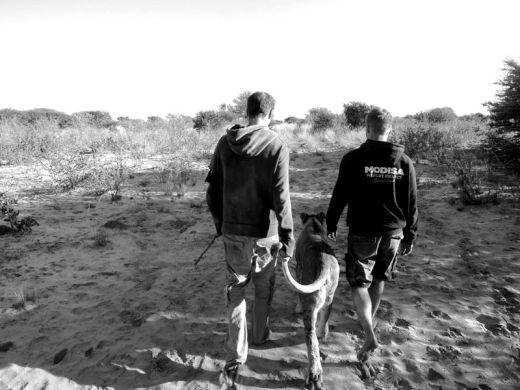 lion-whisperers-modisa-botswana-by-nicolai-frederk-bonnen-rossen-11_s
