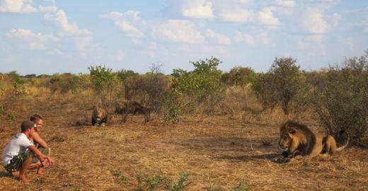 lion-whisperers-modisa-botswana-by-nicolai-frederk-bonnen-rossen-19_s